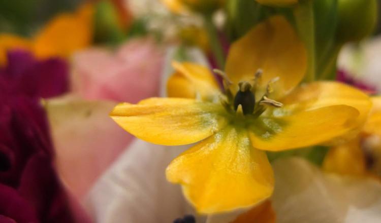 kwiaty-na-walentynki-1024x440