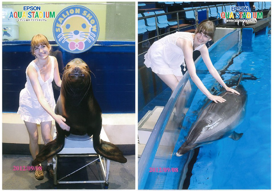 Touch the dolphin and seal in Tokyo