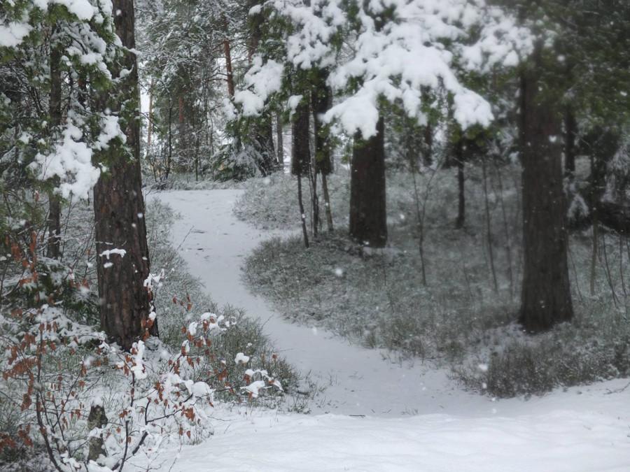 Fińska zima