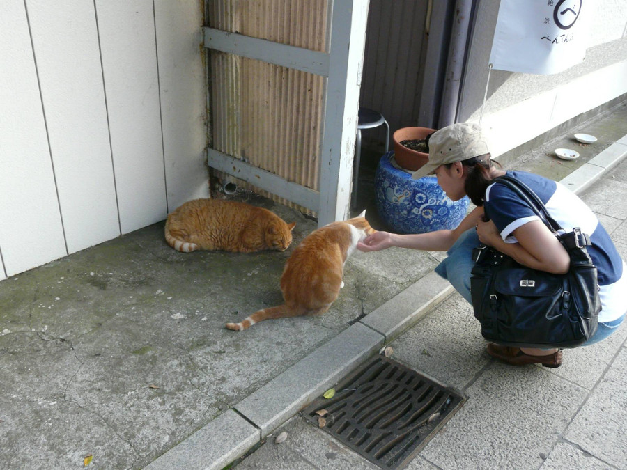 Cats in Japan