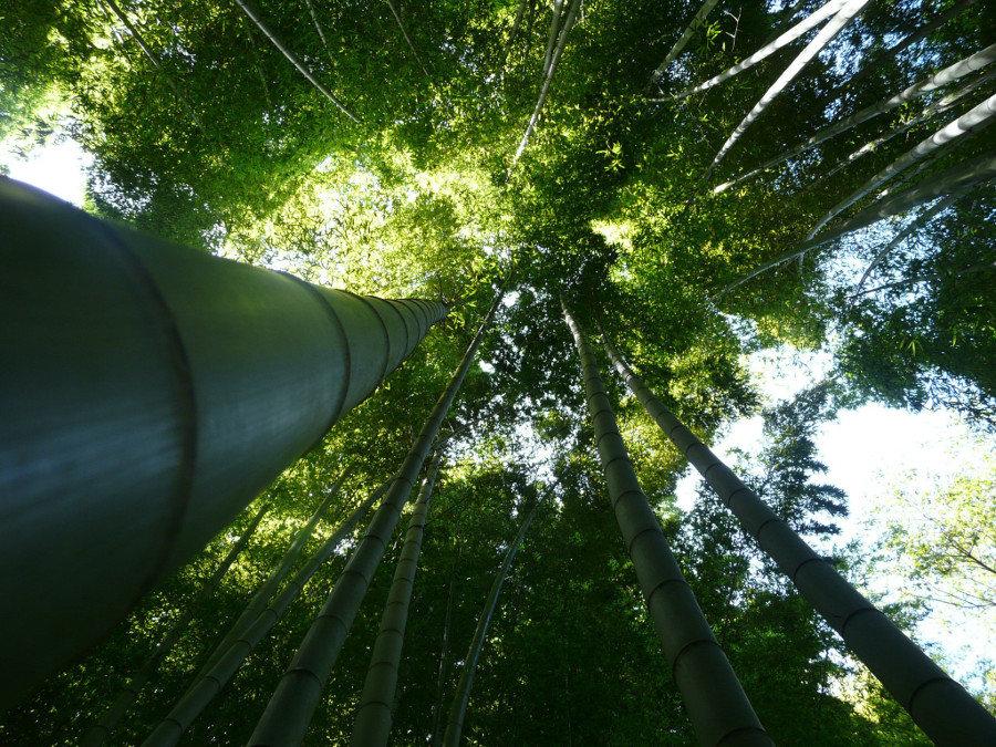 Bambusowy las, Kamakura