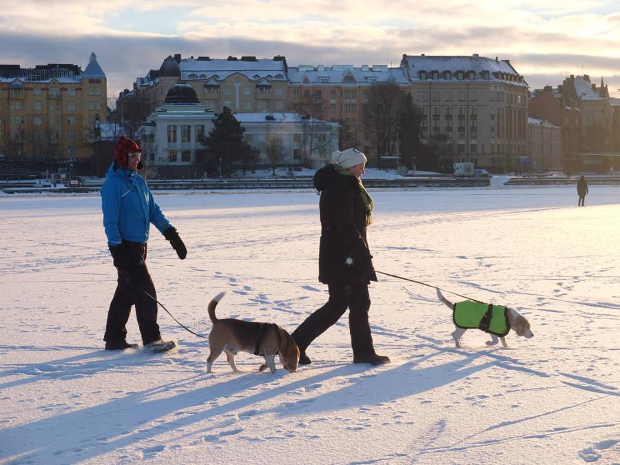 Zamarznięte, zimowe morze w Finlandii