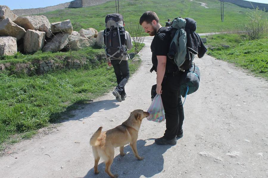 Psy w Teodozji