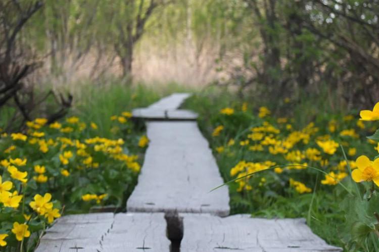 wiosna-finlandia-kwitnie