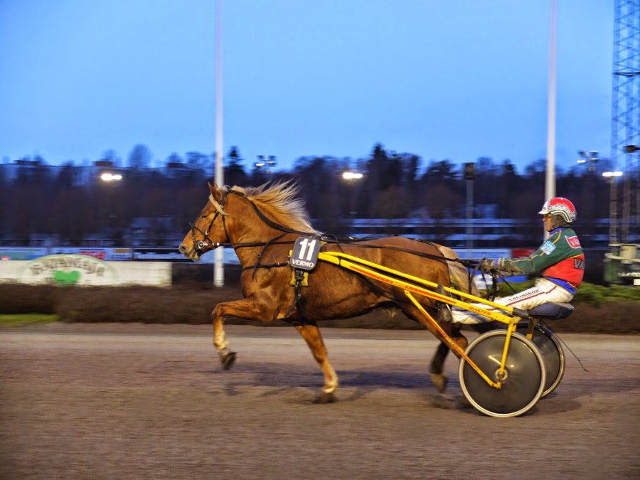 Finowie lubią wyścigi kłusaków