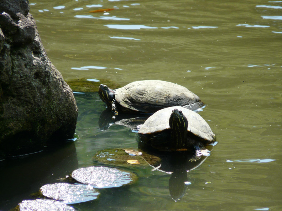 City turtles