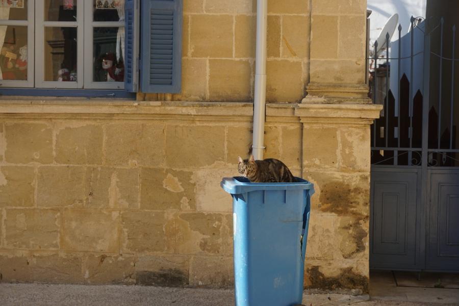 Kot w śmietniku