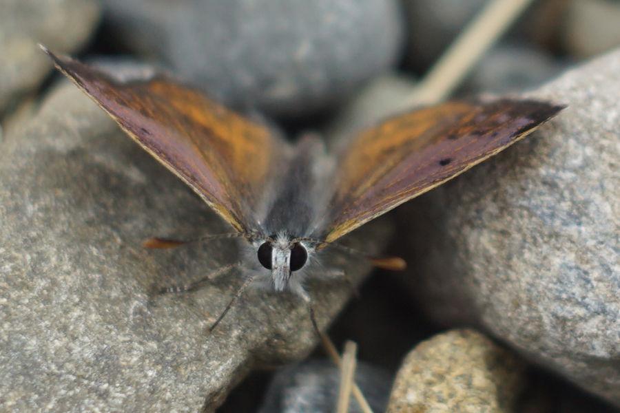 Motyl od frontu