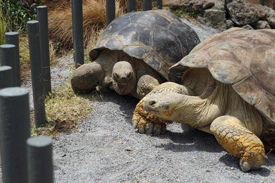 Powolne żółwie