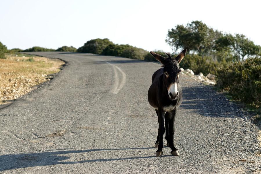 Rezerwat osłów Cypr