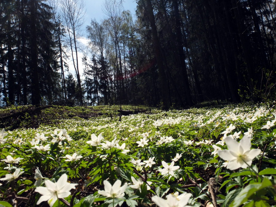 Fińska wiosna