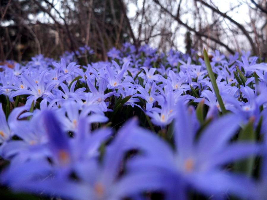 Wiosna w Finlandii