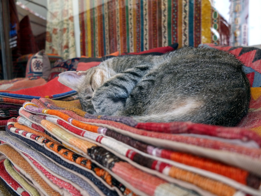 Koty w Turcji
