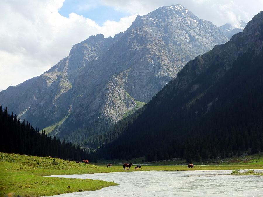 Dolina Karakol oraz pasące się konie